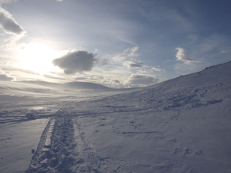 Ski tracks in snow